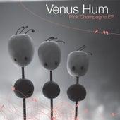 Pink Champagne by Venus Hum