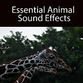 Essential Animal Sound Effects by Sound Effects