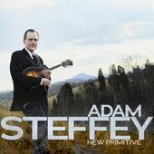 New Primitive by Adam Steffey