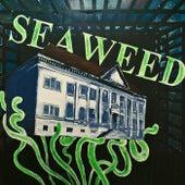 Seaweed by Seaweed