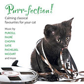 Purr-fection! Calming Classical Favourites For Your cat von Various Artists