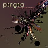 Porcupines for Sale by Pangea