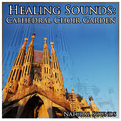 Healing Sounds: Cathedral Choir Garden by Natural Sounds