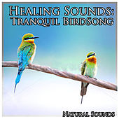 Healing Sounds: Tranquil Birdsong by Natural Sounds