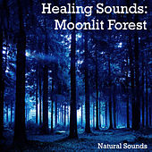 Healing Sounds: Moonlit Forest by Natural Sounds