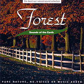 Sounds Of The Earth: Forest by David Sun