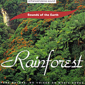 Rainforest by Sounds Of The Earth