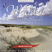 Wadden - Sands And Seagulls by Sounds Of The Earth