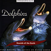 Dolphins by Sounds Of The Earth