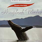 Humpback Whales by Sounds Of The Earth