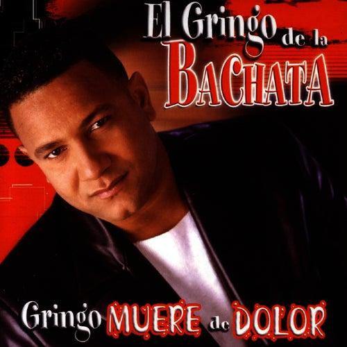Gringo Muere De Dolor by El Gringo De La Bachata