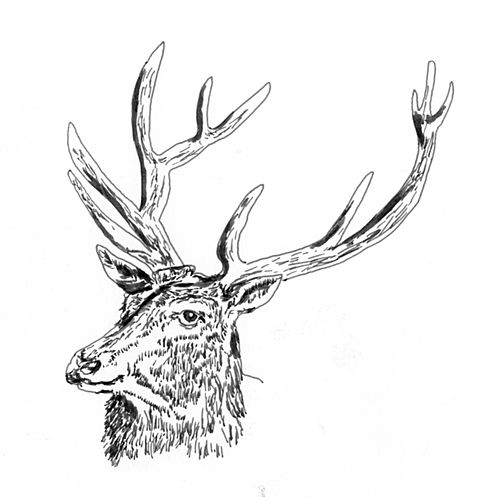 Black Deer by Black Deer