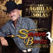 Las Aguilas Andan Sueltas by Severo Benito Y Su Banda Cachas de Oro