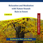 Relaxation and Meditation with Nature Sounds - Rain in Forest - Birdsong in Rain with Music by Rettenmaier