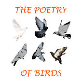 The Poetry of Birds by Various Artists