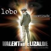 Lobo Domesticado by Valentin Elizalde