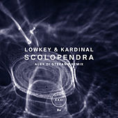 Scolopendra by Lowkey