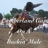 Cumberland Gap On A Buckin' Mule by Various Artists