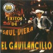 20 Exitos De by Saul Viera el Gavilancillo