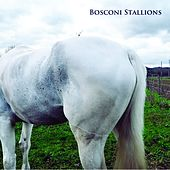 Bosconi Stallions Compilation - Celebrating 5 Years of Bosconi Records by Various Artists