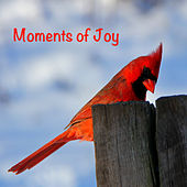 Moments of Joy by Various Artists