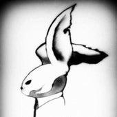The Rabbit by Random