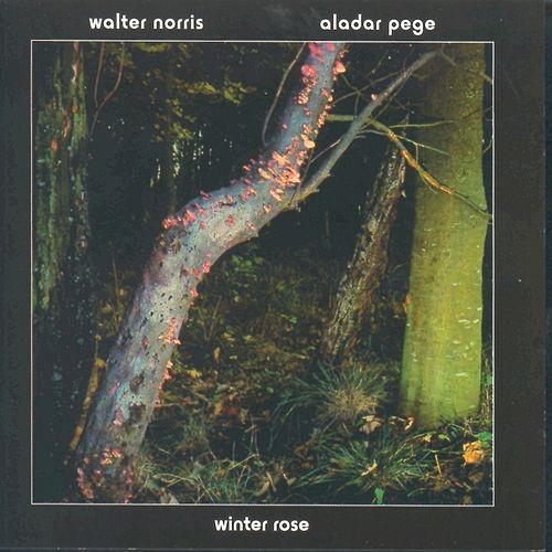 Winter Rose by Walter Norris