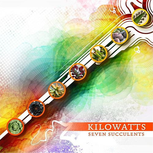 Seven Succulents by KiloWatts