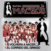 Si Volviera A Nacer...El Corrido Del Gringo by Banda Machos