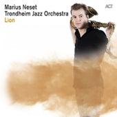 Lion by Marius Neset