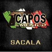 Sacala by Los Capos De Mexico