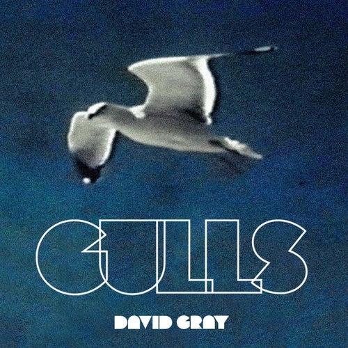 Gulls by David Gray