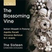 The Blossoming Vine: Italian Maestri in Poland by Eamonn Dougan