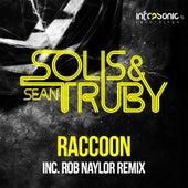 Raccoon by Solis