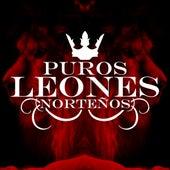 Puros Leones Norteños by Various Artists