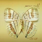 White Moth by Xavier Rudd