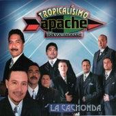 La Cachonda by Tropicalisimo Apache