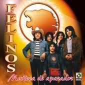 Muñeca De Aparador by Felinos