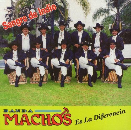 Sangre De Indio by Banda Machos