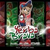 Humilde 10 Años by Yerba Brava