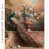 Vivaldi: Oboe Concerto, Violin Concertos, Concerto Alla Rustica & String Concertos - Bach: Air On the G String, Adagio for Oboe & Toccata and Fugue - Pachelbel: Canon in D - Albinoni: Adagio for Oboe - Mendelssohn: Wedding March - Wagner: Bridal Chorus by Various Artists