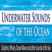 Underwater Sounds of the Ocean: Dolphins, Whales, Ocean Waves and Other Sounds of the Sea by Robbins Island Music Group