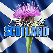 Flower of Scotland by Various Artists