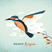 Kingfisher by Prawn
