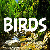 Bird Sounds by Bird Sounds