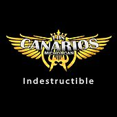 Indestructible by Los Canarios De Michoacan