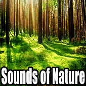 Relax Sounds of Nature by Sounds Of Nature