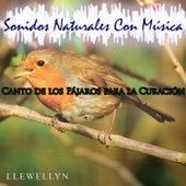 Canto de los Pájaros para la Curación: Sonidos Naturales Con Música by Llewellyn