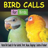 Bird Calls for Birds: Natural Bird Sounds for Your Cockatiel, Parrot, Macaw, Budgerigar, Cockatoo & Parakeet by Robbins Island Music Group