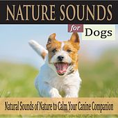 Nature Sounds for Dogs: Natural Sounds of Nature to Calm Your Canine Companion by Robbins Island Music Group